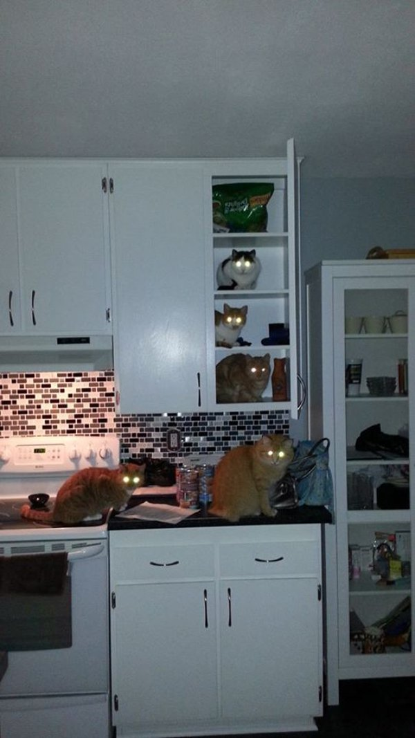 Pets Caught Red Handed ladder to food