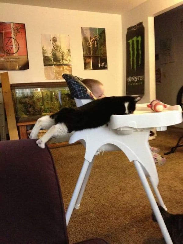 Pets Caught Red Handed on babys high chair