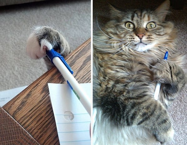 Pets Caught Red Handed pen thief