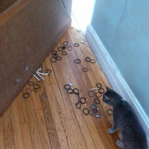 Pets Caught Red Handed stash of hair ties