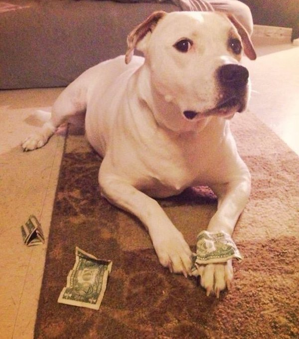 Pets Caught Red Handed stealing money