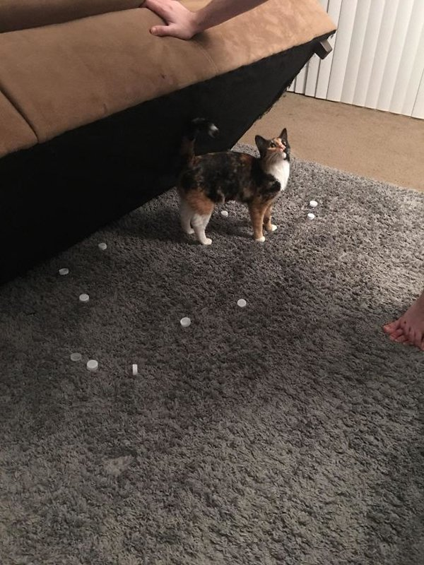 Pets Caught Red Handed water bottle caps under sofa