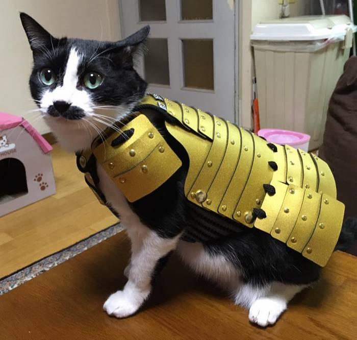 Samurai Armor for Cats Dogs gold armor on cat