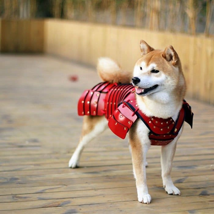 Samurai Armor for Cats Dogs red armor on dog