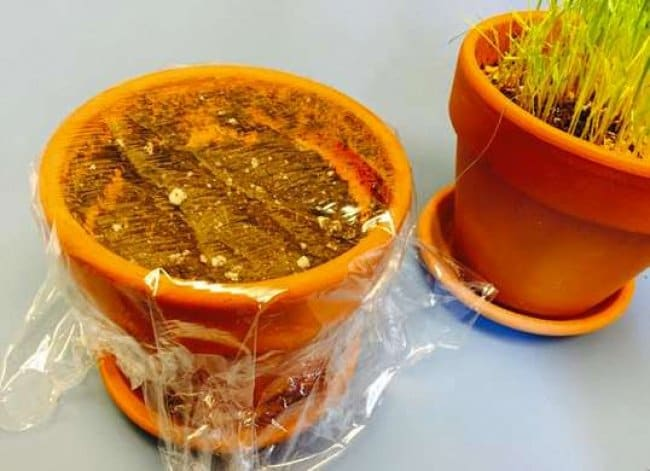 Unexpected Uses For Plastic Food Wrap miniature greenhouse