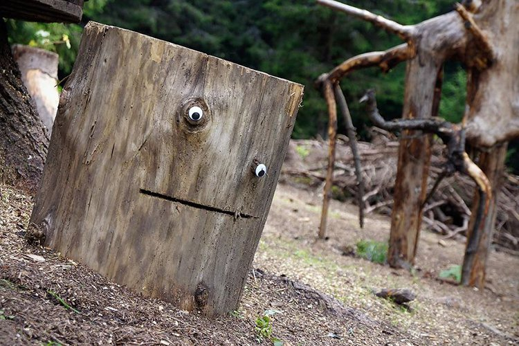 googly eyes on broken things tree stump