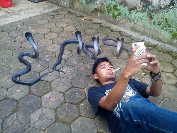 intriguing images selfie with cobras