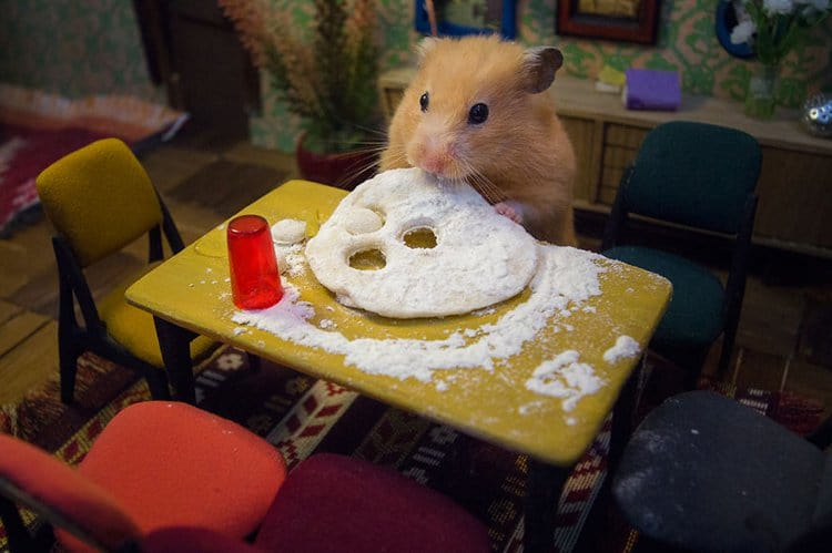 miniature town for hamsters dough