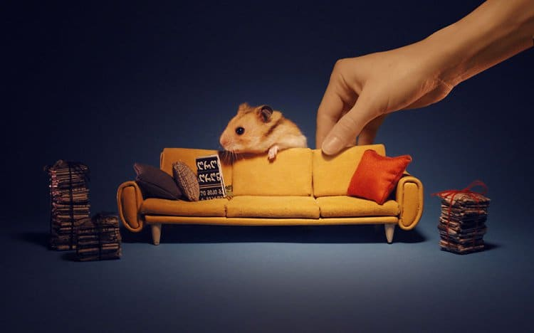 miniature town for hamsters sofa