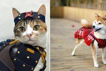samurai-armor-for-cats-dogs