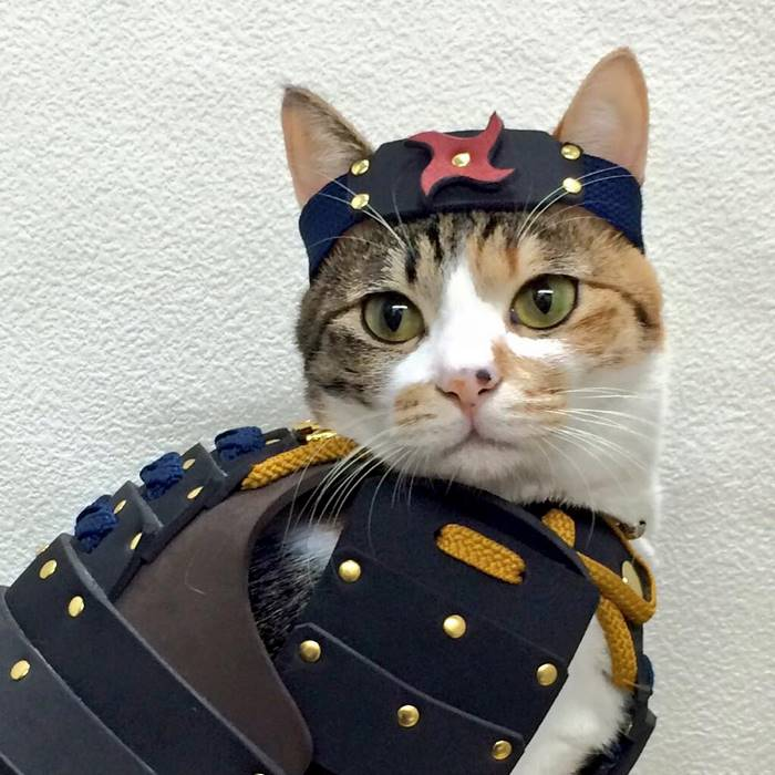 samurai armor for cats dogs cat in blue armor