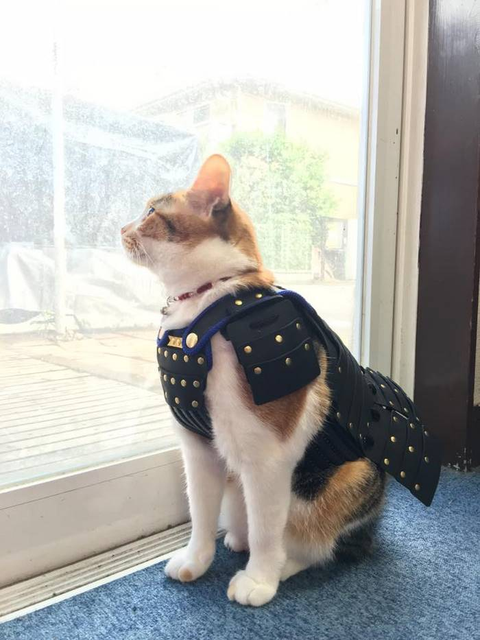 samurai armor for cats dogs cat model