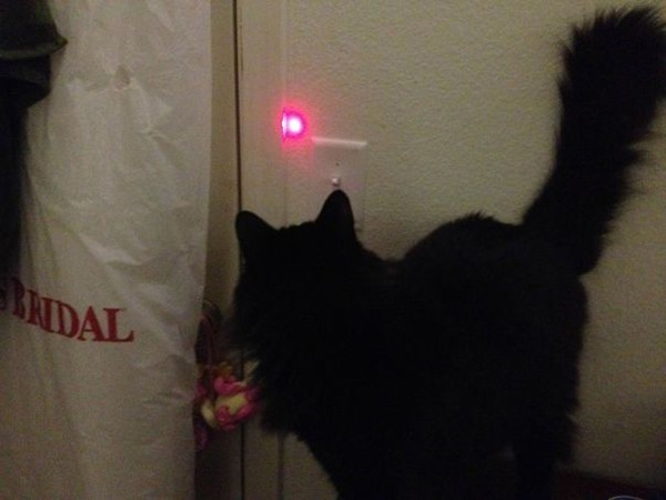 using laser to get cat to turn light off Why Being Married Is The Best