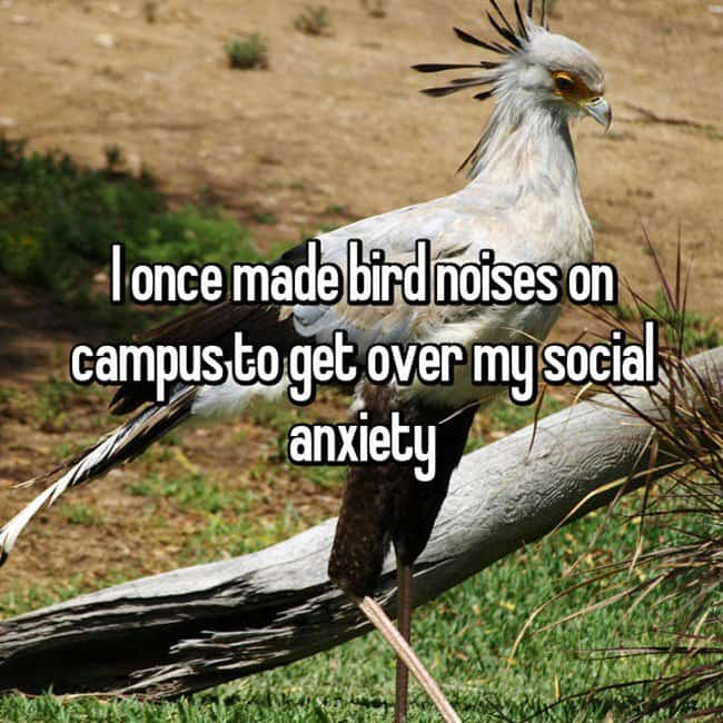 Anxiety Hacks bird noises