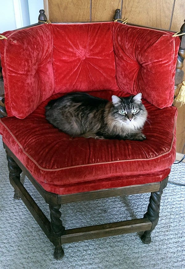 Best Things In Thrift Stores cat thrown chair
