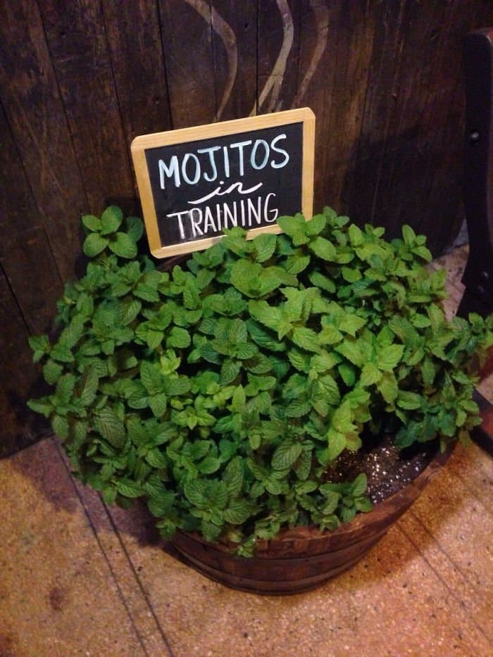 Genius Bars And Restaurants mojitos in training