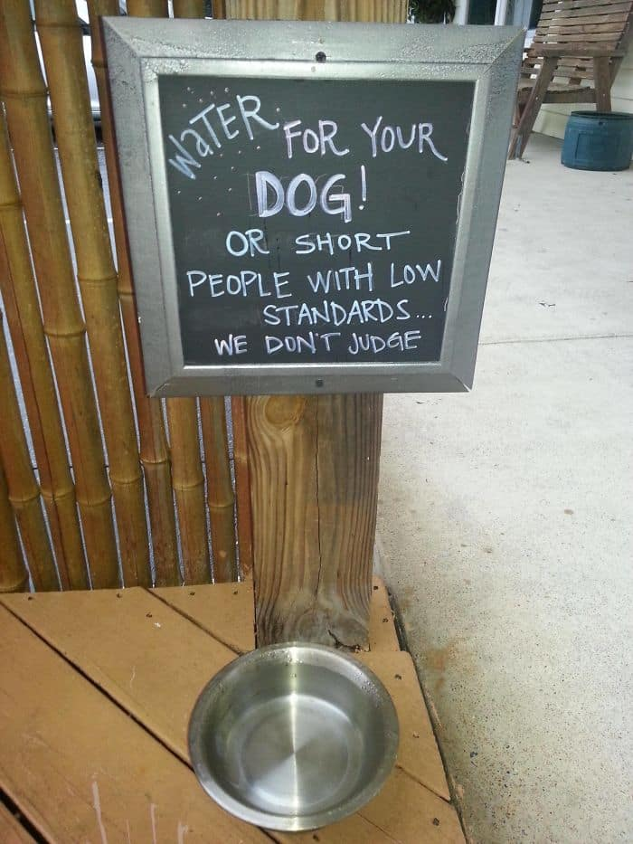 Genius Bars And Restaurants water for your dog or short people