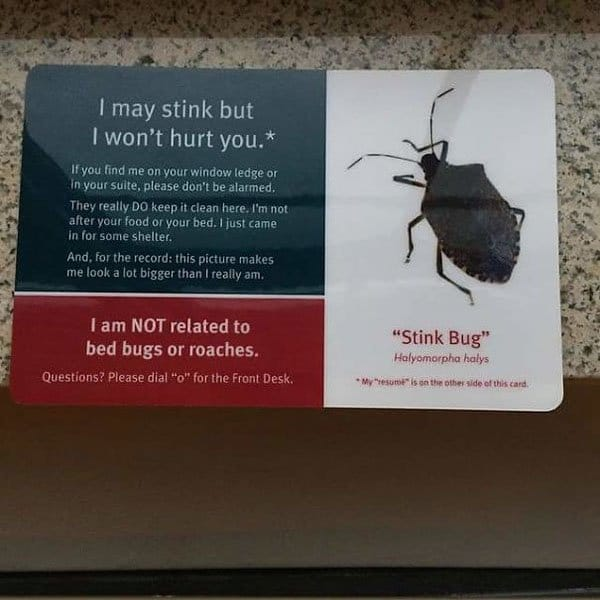 Genius Hotels stink bug