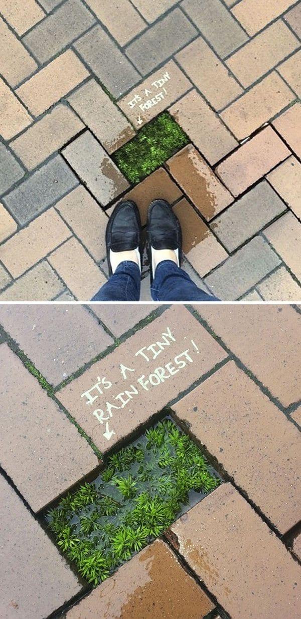 Genius Vandalism its a tiny forest
