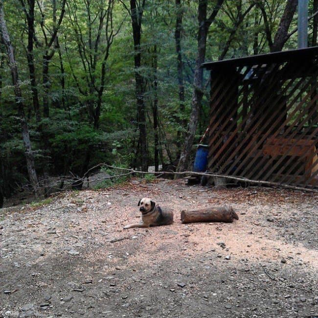 Photos You'll Have To Look Twice At dog with log body