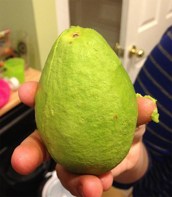 Pictures Of Peeled Fruit avocado