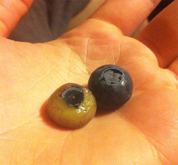 Pictures Of Peeled Fruit blueberry