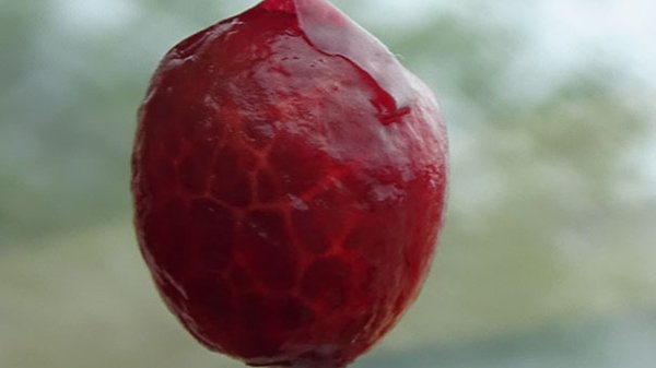 Pictures Of Peeled Fruit cherry
