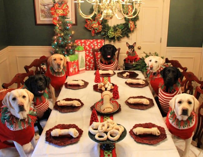 Pictures That Will Make Your Day Better dog christmas dinner