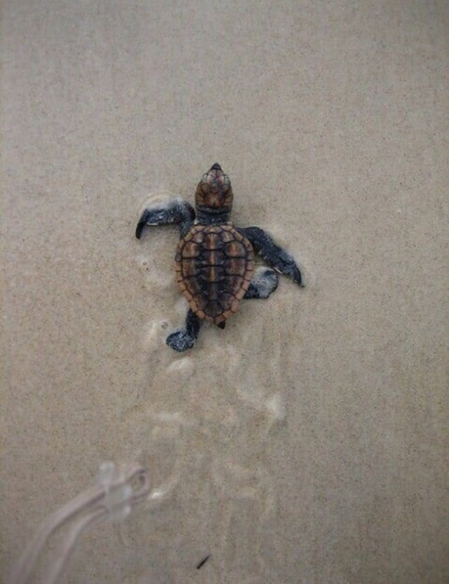 Pictures That Will Make Your Day Better turtle