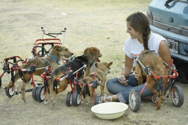 Pictures That Will Make Your Day Better women with disabled dogs