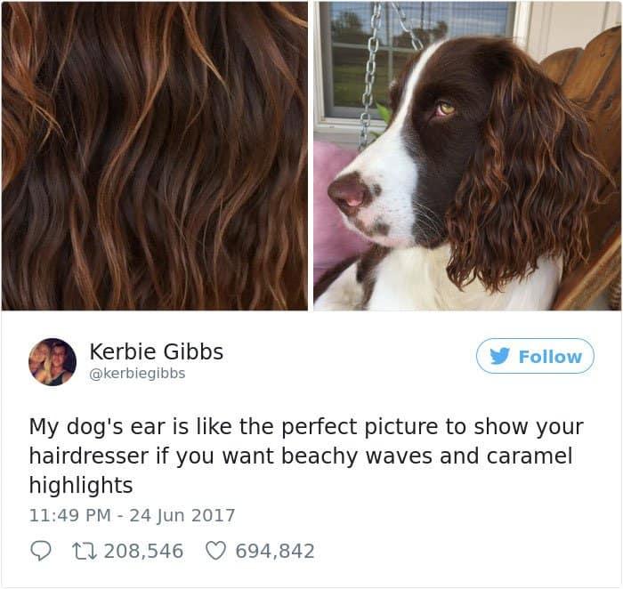 Times Women Won The Internet dog ear hair