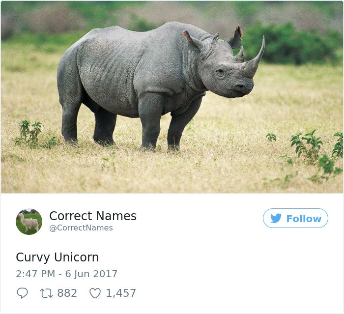 Twitter Account Renames Everyday Objects curvy unicorn