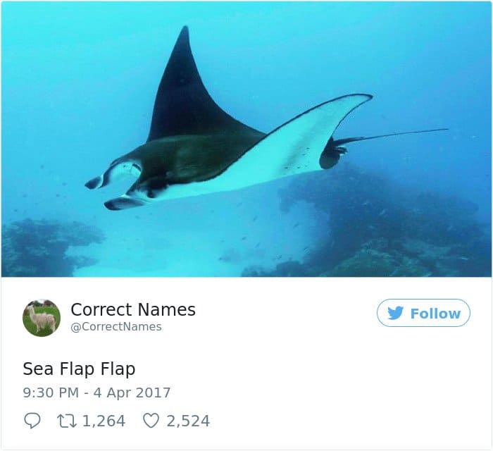 Twitter Account Renames Everyday Objects sea flap flap