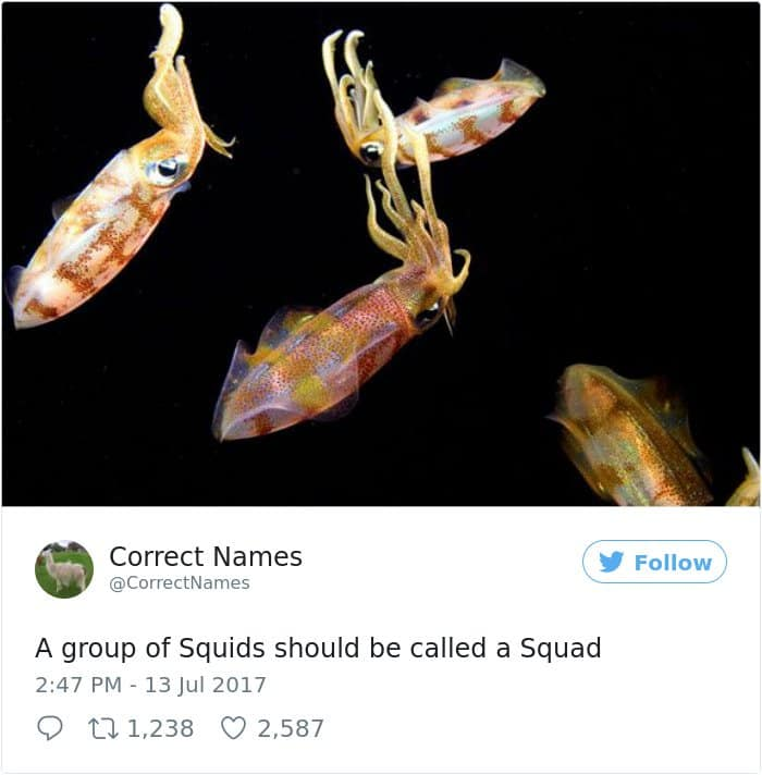 Twitter Account Renames Everyday Objects squids squad
