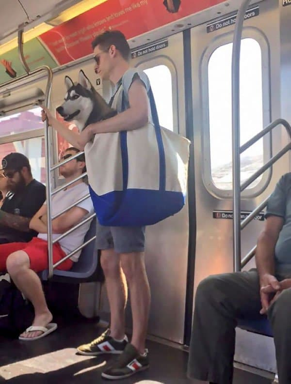Weirdest People Ever Spotted On The Subway dog in bag