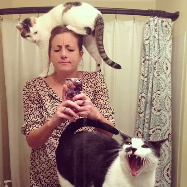 Cats Didn't Want To Be Involved In Selfies cute photo fail