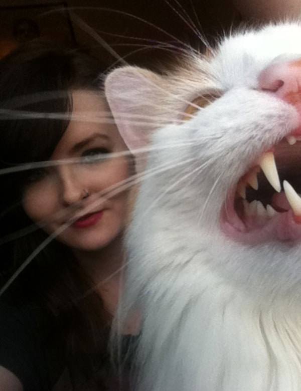 Cats Didn't Want To Be Involved In Selfies new lipstick