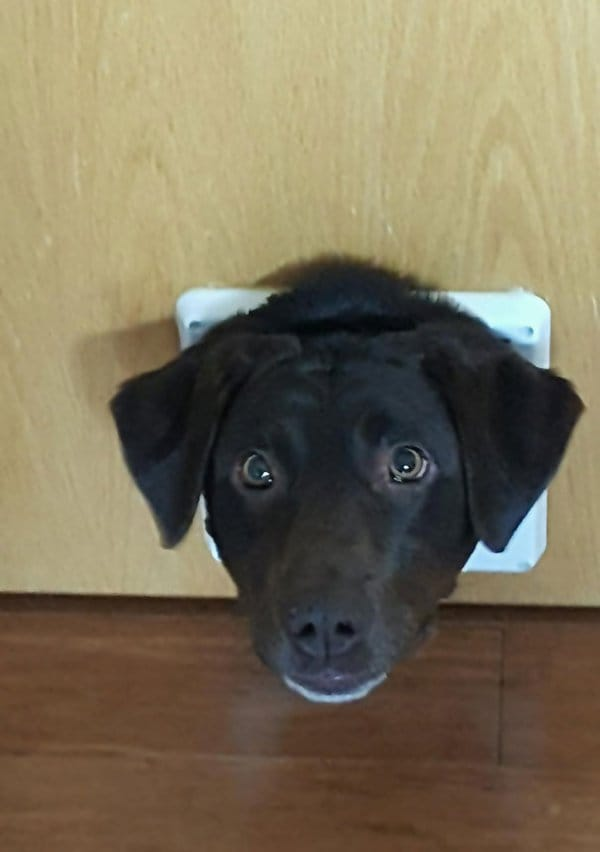Dogs Who Think They Are Cats cat door dog head