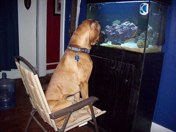 Dogs Who Think They Are Cats dog fish watching