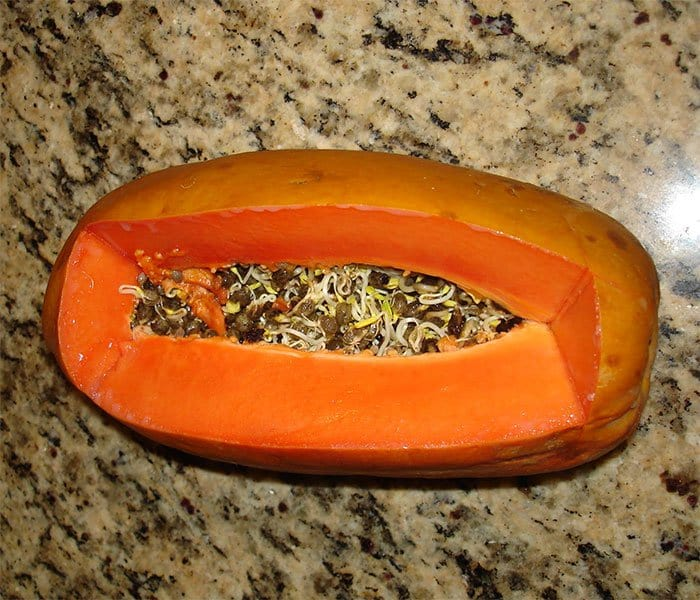 Fruit And Vegetables Start Sprouting Early papaya