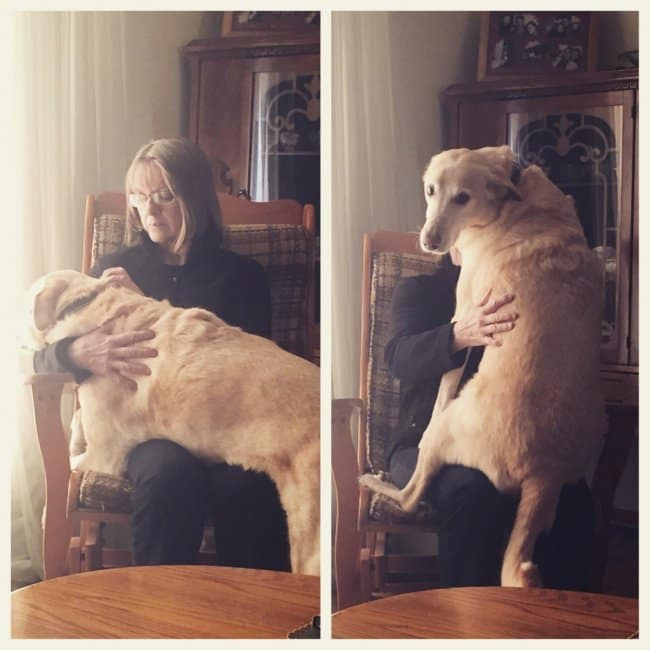 Heartwarming Photos Of Dogs loves hugs
