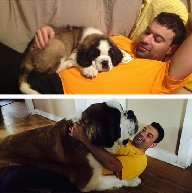 Heartwarming Photos Of Dogs once a puppy