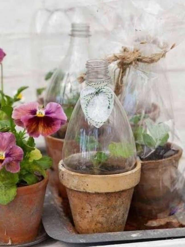 Ideas For Reusing Plastic Bottles mini greenhouse