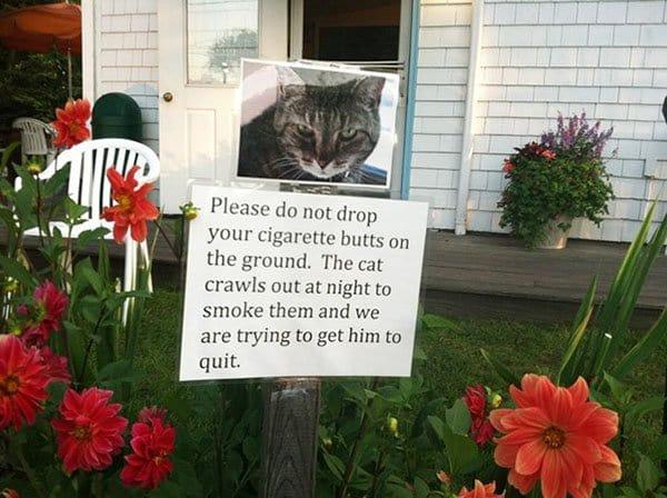 Interesting Neighbors bad habit cat