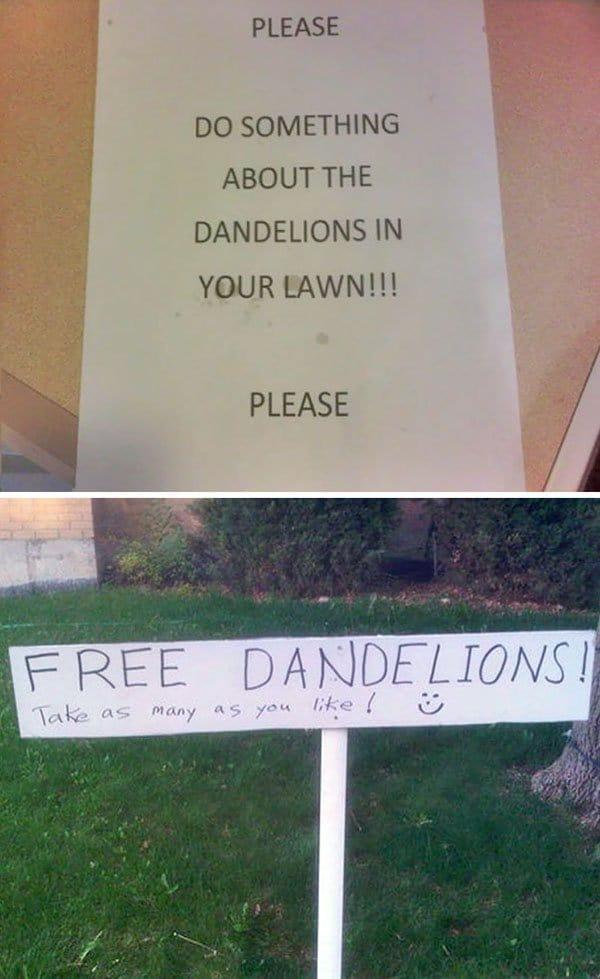 Interesting Neighbors free dandelions