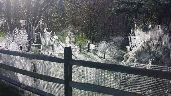 Interesting Neighbors frozen sprinklers