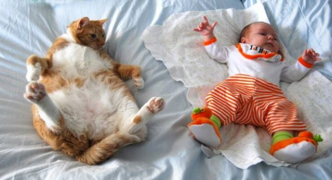 Photos That Will Make You Smile cat and baby similar poses
