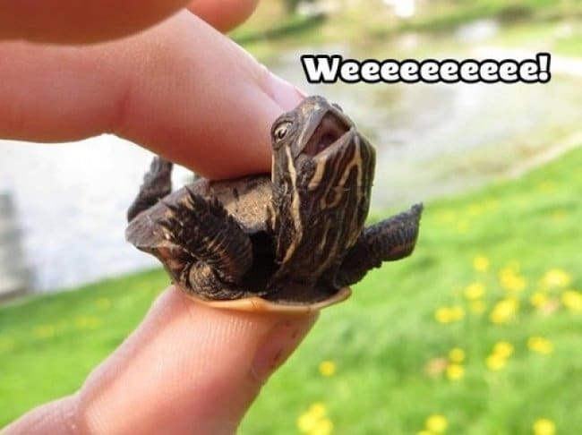 Photos That Will Make You Smile turtle weee