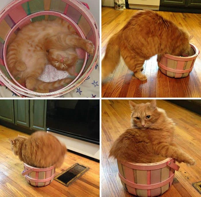cats fitting into small places basket brought home in