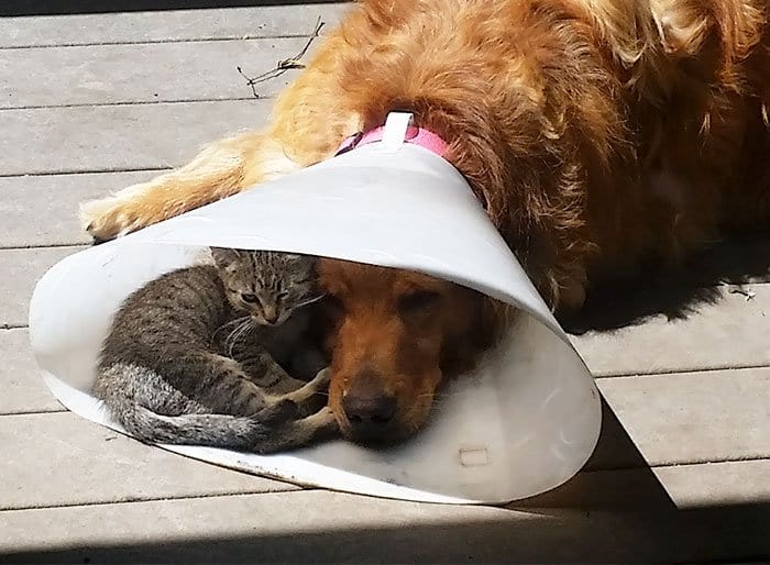 cats fitting into small places dog cone